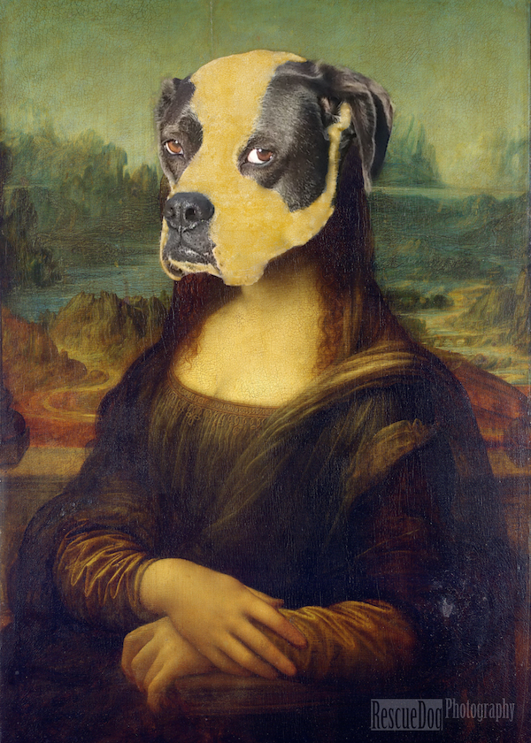 Rescue Dog Photography Mona Lisa