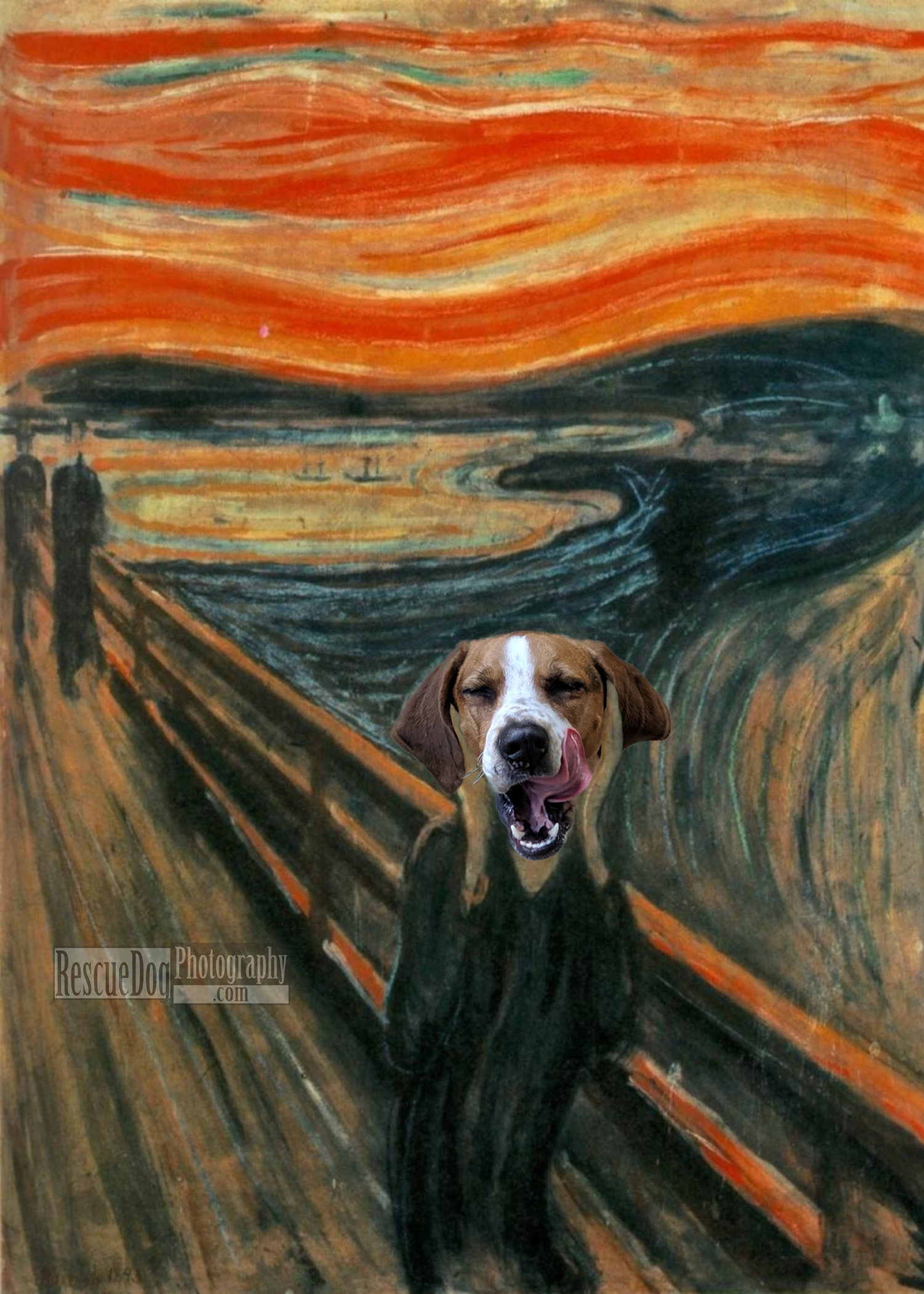 Rescue Dog Photography The Scream