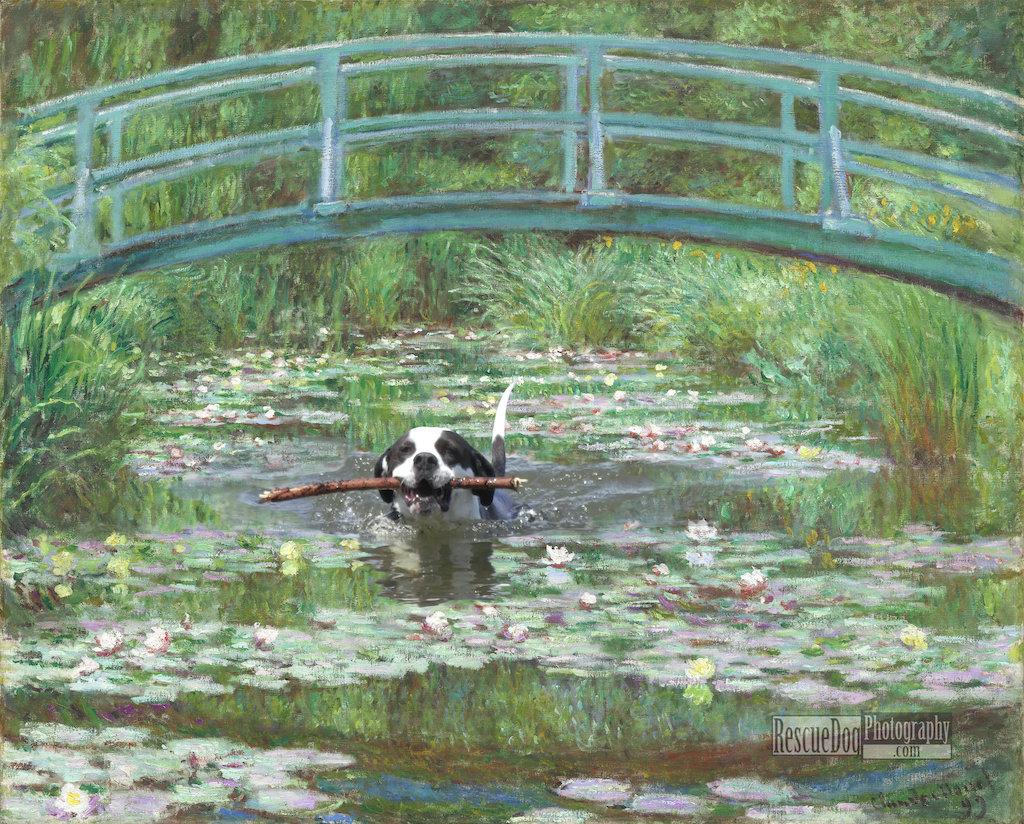 Rescue Dog Monet Japanese Footbridge