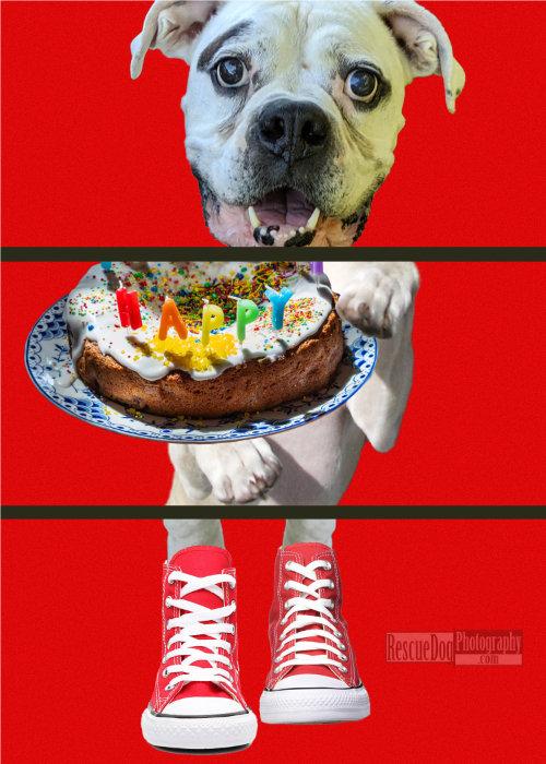 Rescue Dog Triptych Converse Hi Tops Cake