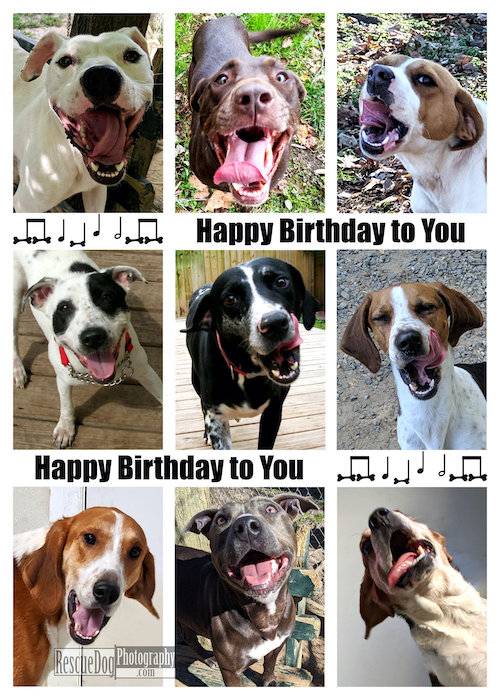 Rescue Dogs Happy Birthday Song Card