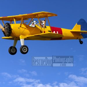 Rescue-Dogs-Flying-Biplane-Fine-Art-Print