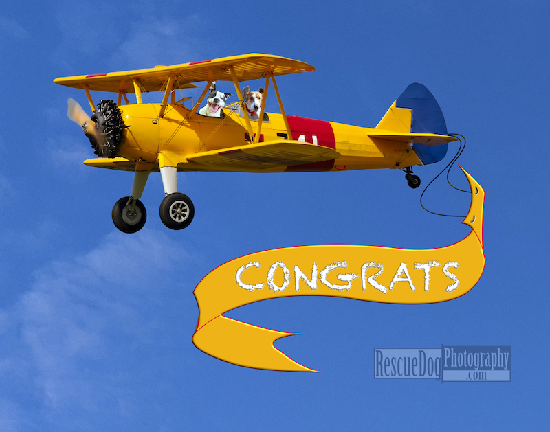 Rescue Dog Card Biplane Congrats