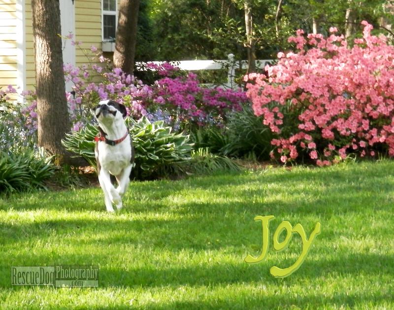 Rescue-Dog-Joy