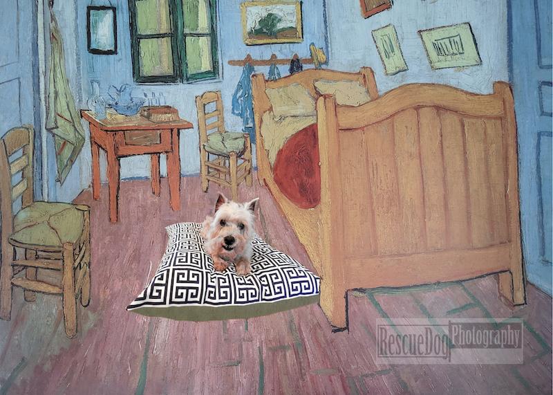 Rescue Dog Van Gogh