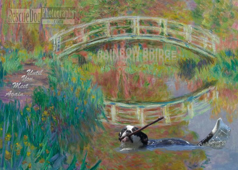 Rescue Dog Monet Pet Sympathy Card