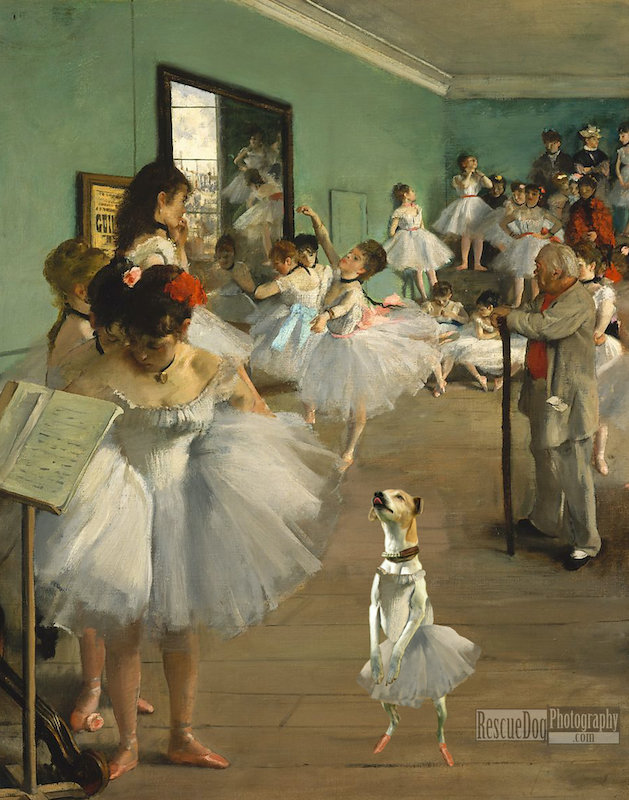 Rescue-Dog-Degas-The-Ballet-Class