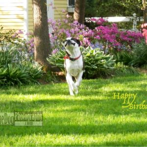 Rescue-Dog-Happy-Birthday-Card