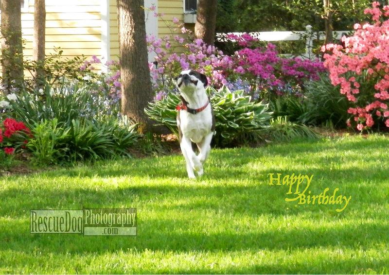 Rescue-Dog-Happy-Birthday-Card