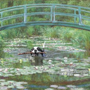 Rescue-Dog-Monet-Japanese-Footbridge