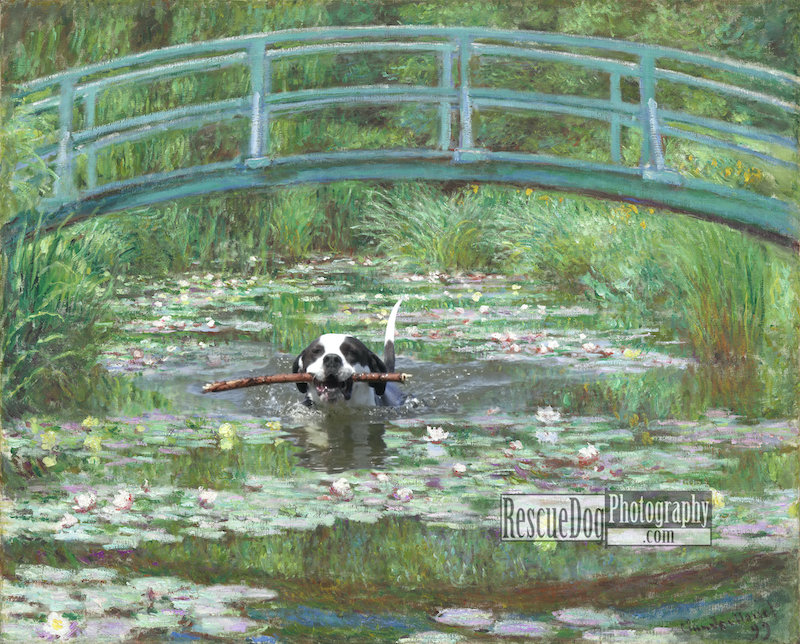 Rescue-Dog-Monet-Japanese-Footbridge