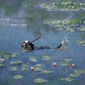 Rescue-Dog-Monet-Water-Lilies