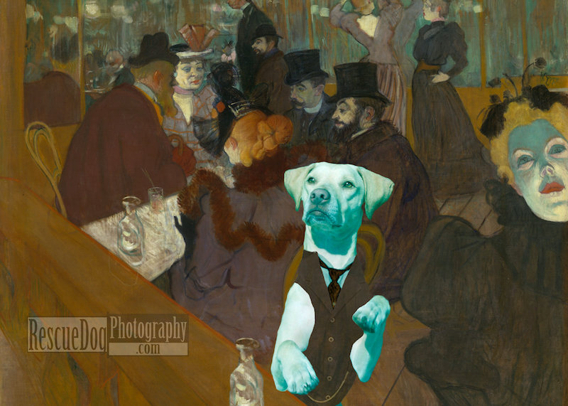 Rescue-Dog-Moulin-Rouge-Card