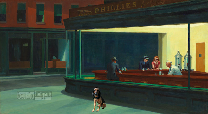 Rescue-Dog-Nighthawks-Hopper