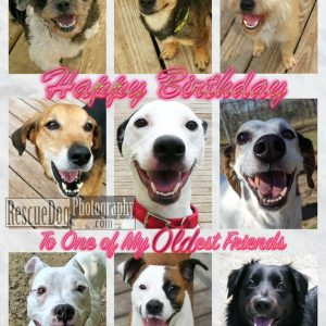 Rescue-Dog-Old-Friend-Birthday-Card