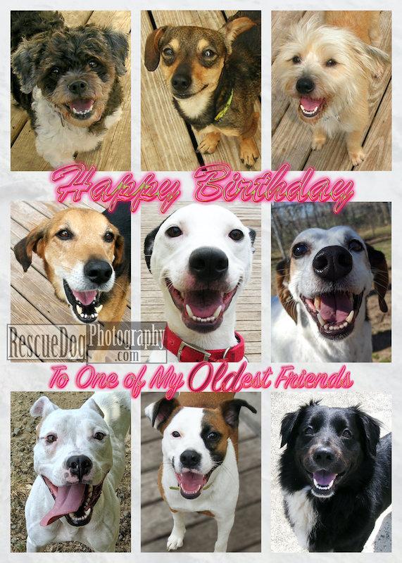 Rescue-Dog-Old-Friend-Birthday-Card