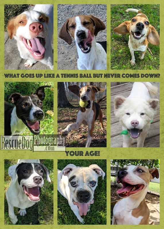 Rescue-Dog-Tennis-Ball-Birthday-Card