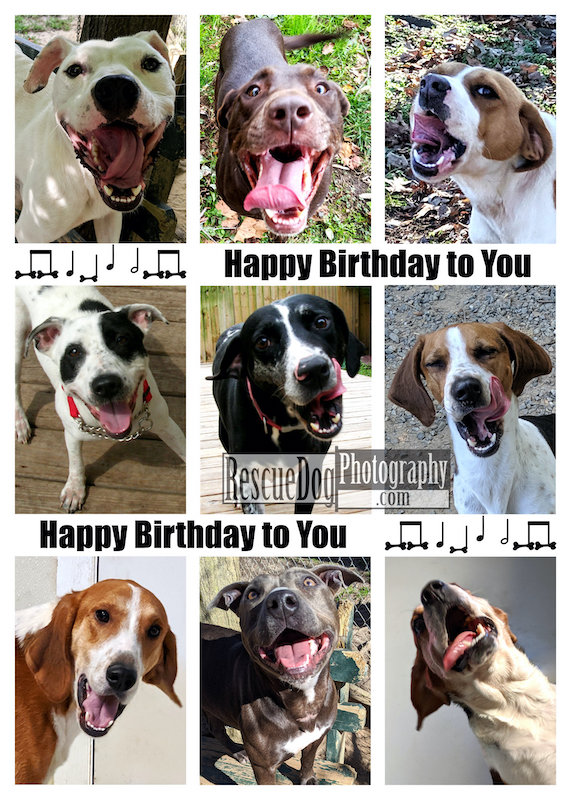Rescue-Dogs-Singing-Happy-Birthday-Card