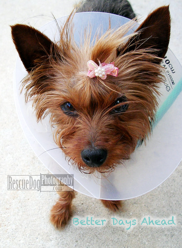Rescue Dog Get Well Card Better Days Ahead
