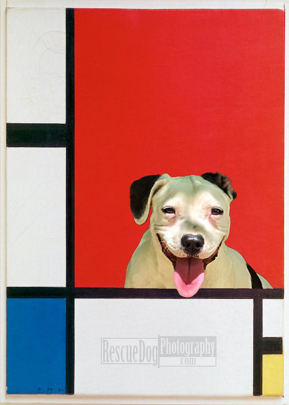 Rescue Dog Piet Mondrian