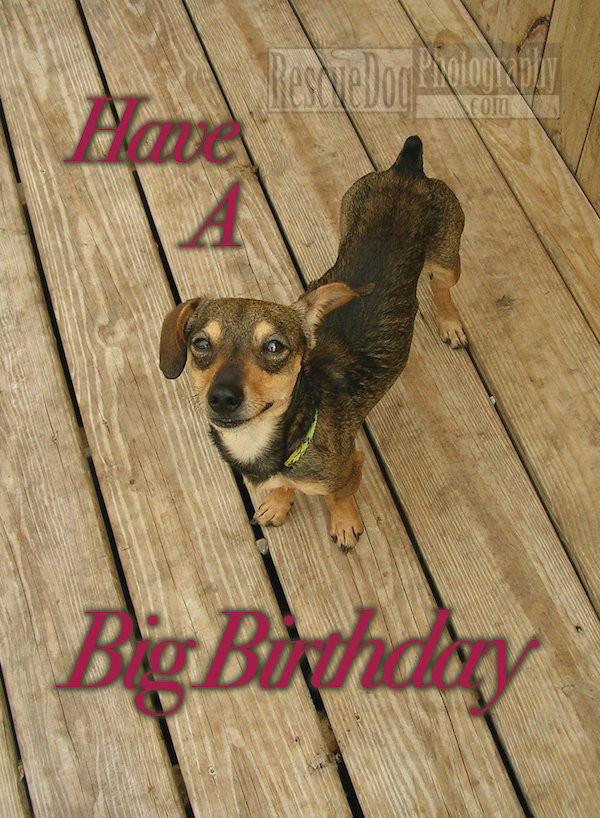Have a Big Birthday Rescue Dog Photography Card