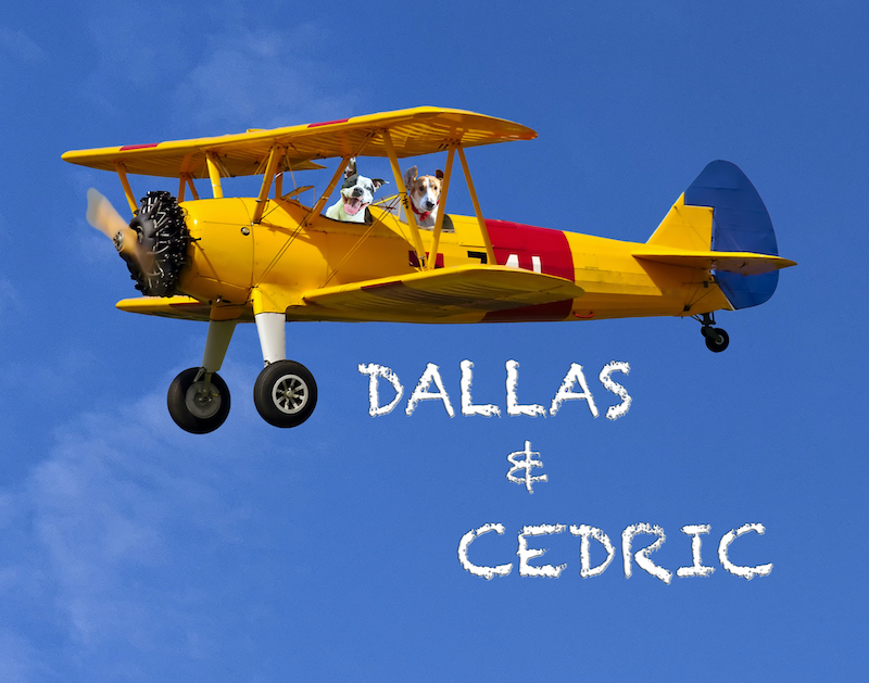 Rescue Dog Photography Biplane with Cloud Text