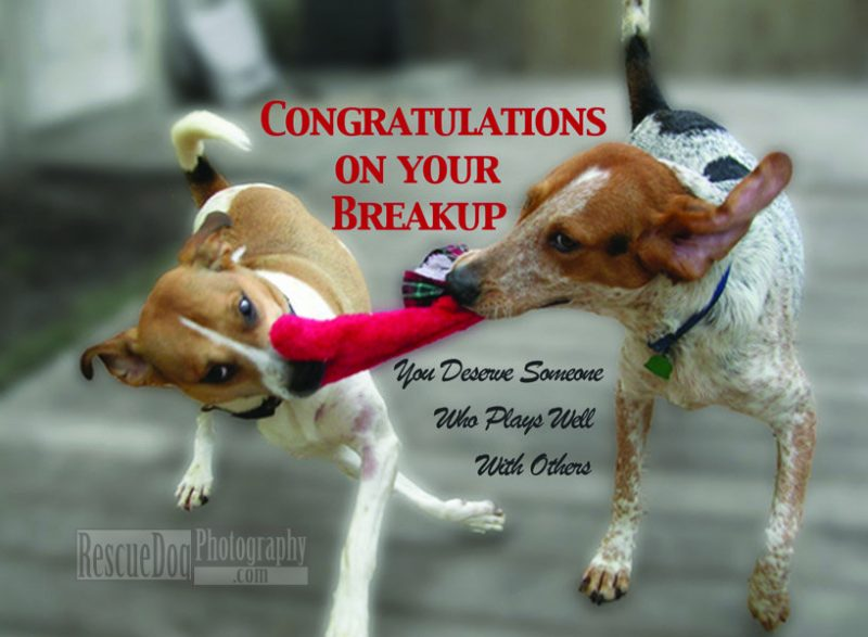 Congrats on your Breakup Funny Rescue Dog Photography Card