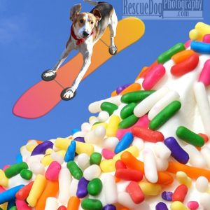 Rescue-Dog-Snowboarding-Ice-Cream-Mountain