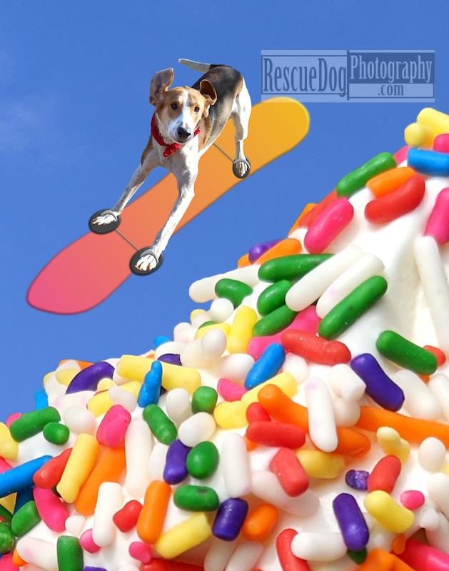 Rescue-Dog-Snowboarding-Ice-Cream-Mountain